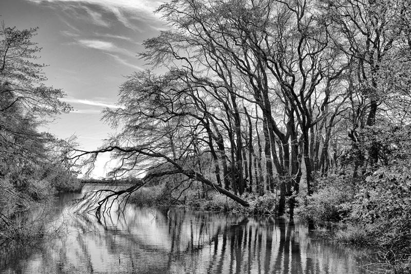 Sagg Swamp Nature Preserve